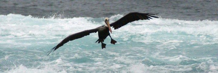 Individuelle, maßgeschneiderte Ecuaddor Reisen und Galapagos Reisen