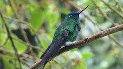 Ecuador Rundreise - Kolibri im Nebelwald