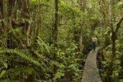 Sacha Lodge Holzstege im Regenwald