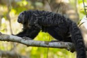 Napo Wildlife Center - Amazonas Tierwelt