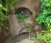 Selva Lodge Ecuador - Papageien Lehmlecke