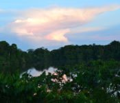 Selva Lodge Ecuador - Landschaft Amazonas