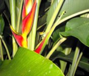Amazonas Tierwelt - Siona Lodge