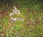 Siona Lodge - Tierwelt Amazonas