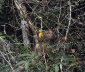 Siona Lodge - Amazonas Tierwelt