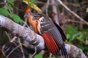 Urwald Ecuador - Quetzal