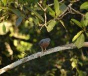Selva Lodge Ecuador - Vogelwelt Amazonas