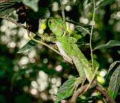 Selva Lodge Ecuador - Tierwelt Amazonas