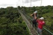 acha Lodge - Canopy Walkway