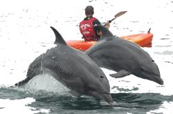 Ecuador Reisen und Galapagos Reisen: mit Delfinen paddeln auf Galapagos