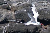 Floreana - Galapagos Inseln