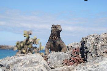 Inselhüpfen auf Galapagos - Landprogramme Galapagos