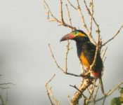 Sani Lodge - Gold Coll Tucan
