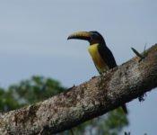 Sani Lodge - Vogelwelt