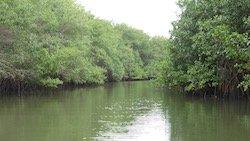 Mangroven Ecuador