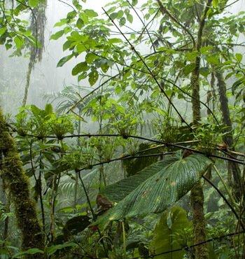 Nebelwald Ecuador