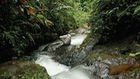 Nebelwald Ecuador - Mashpi Lodge