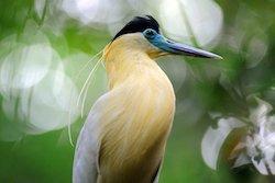Vogelbeobachtung - Napo Wildlife Center