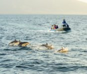 Galapagos Kreuzfahrt Yacht Eric - Delfine