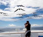 Galapagos Kreuzfahrt Yacht Coral I - Fregattvögel