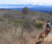 Walking Galapagos Reise - Insel Isabela Reittour