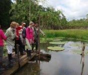 Cattleya Journey - Aktivitäten