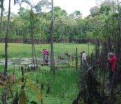Cattleya Journey - Aktivitäten Amazonas