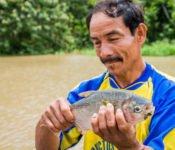 Cattleya Journey - Mann mit Piranha