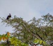 Cattleya Journey - Tierwelt Amazonas