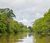 Cattleya Journey - Fluss im Amazonas