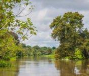 Cattleya Journey - Landschaft Amazonas