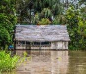 Cattleya Journey - Hütte im Amazonas