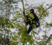 Cattleya Journey - Affe im Amazonas