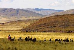 Landschaft zwischen Puno und Cusco
