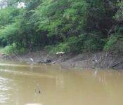 Cattleya Journey - Tierwelt im Amazonas