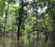 Amazonas Expedition