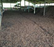 Lagerhalle für Paranüsse in Bolivien