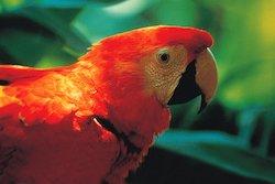 Zubucherreise Mythos Amazonien - Peru Rundreisen