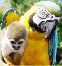 Papagei mit Äffchen