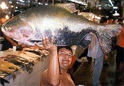 Amazonas Expedition - Mann mit Riesenfisch auf Markt