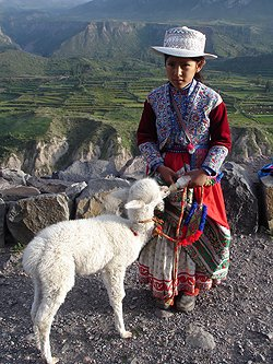 Peru Rundreisen - Colca Canyon