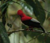 Mashpi Lodge - Vogelbeobachtung