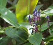 Mashpi Lodge - Pflanzenwelt