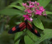 Mashpi Lodge - Pflanzenwelt Nebelwald
