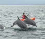 Galapagos Kreuzfahrt Athala II - Kayaking