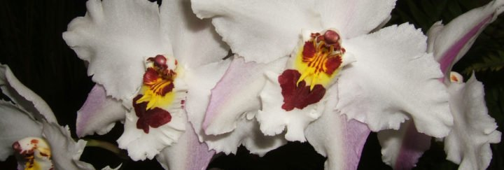 Orchideen Ecuador