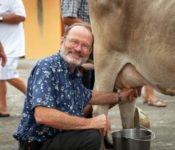 Tren Crucero - Zugreise durch Ecuador - Touristen melken Kühe