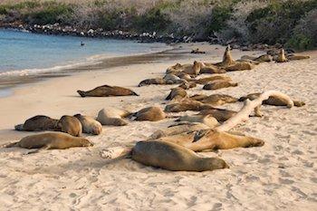 Galapagos Multisport Touren - Strand mit Seelöwen