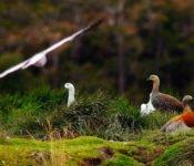 Australis Kreuzfahrten - Fauna