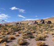 Altiplano - San Pedro de Atacama